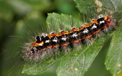What is Biodiversity Net Gain?