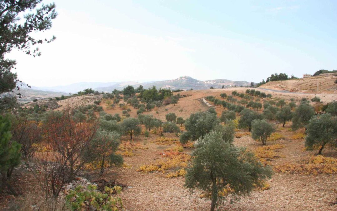 Aljoun Development & Preservation Plan, Jordan