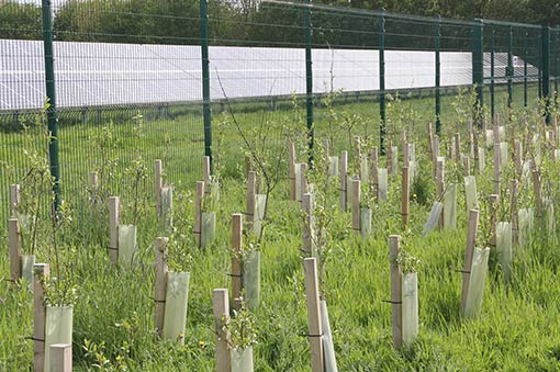 Air Pollution – Hedgerows Can Help