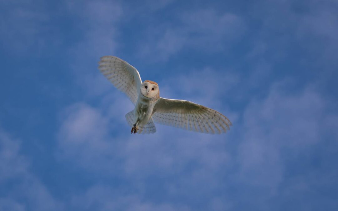 Ecological Monitoring: Another Successful Year for Barn Owls at Avonmouth
