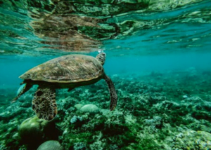 Plastic and the Environment: Taking Action